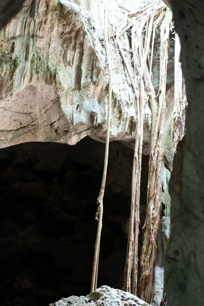 roots growing into the green grotto cave in jamaica