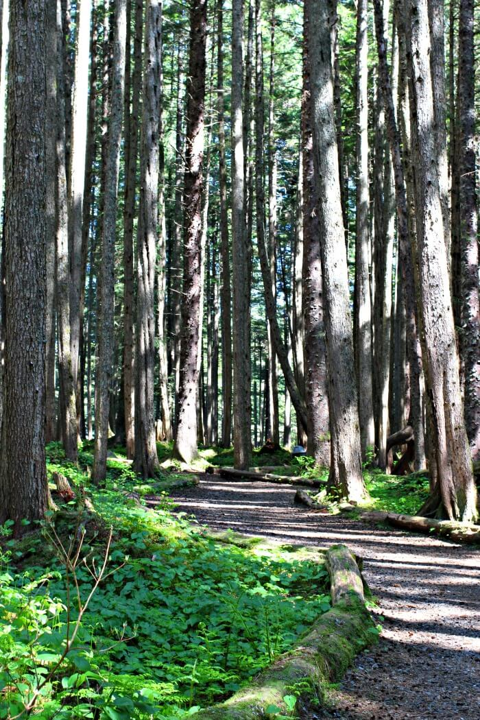 THINGS TO DO IN ICY STRAIT POINT