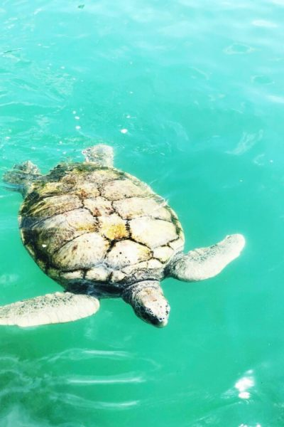 TURTLE SANCTUARY ON GRAND CAYMAN ISLAND