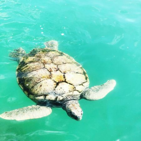TURTLE SANCTUARY ON GRAND CAYMAN ISLAND