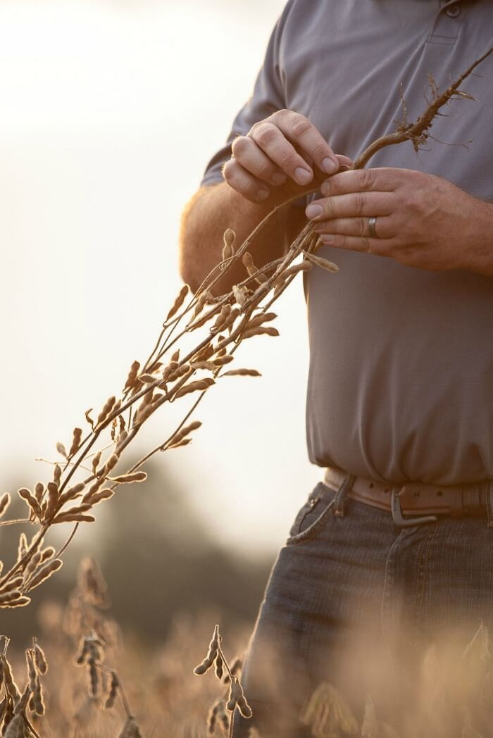 FARMER WITH SOYBEAN PLANT